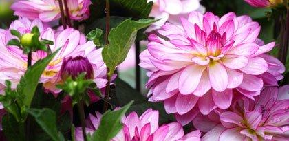 Blumenbeet Sommerblüher