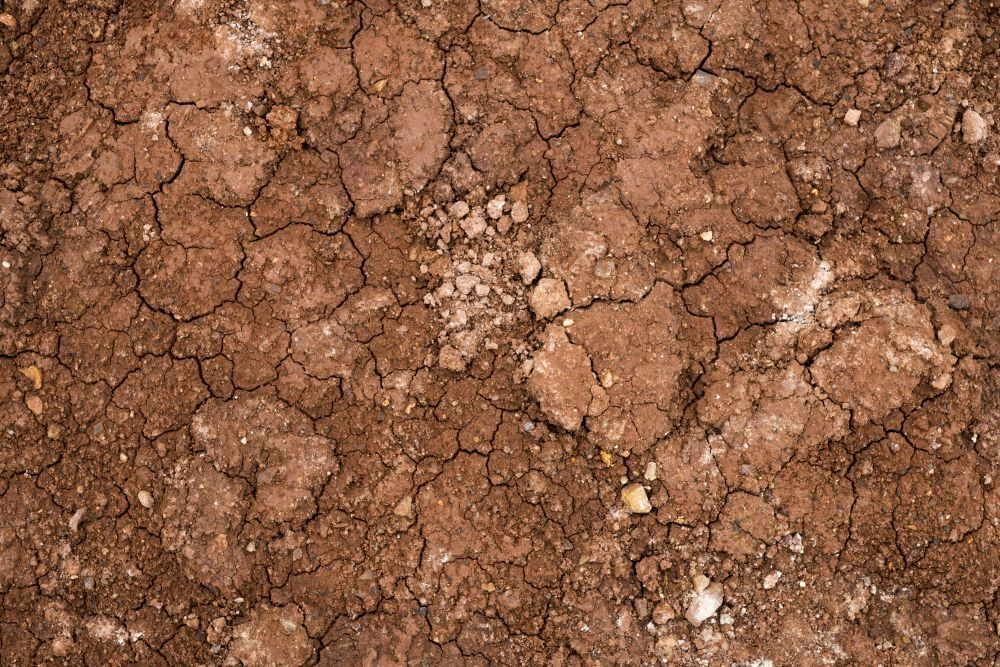 Lehmboden verbessern