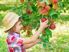Obstgarten pflanzen