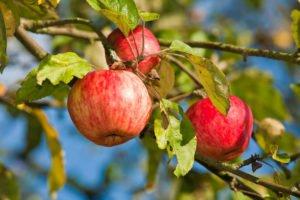 Obstgarten anpflanzen