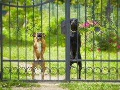 Garten hundesicher machen