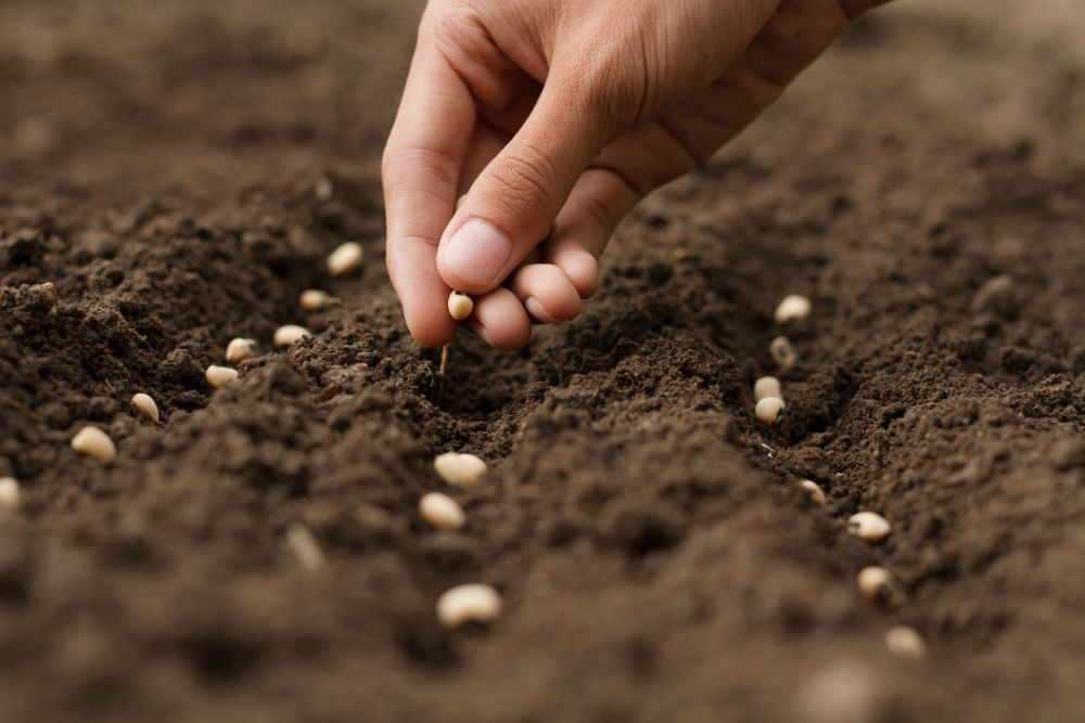 Gartenboden für die Aussaat vorbereiten