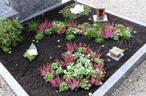 Grabbepflanzung Sträucher