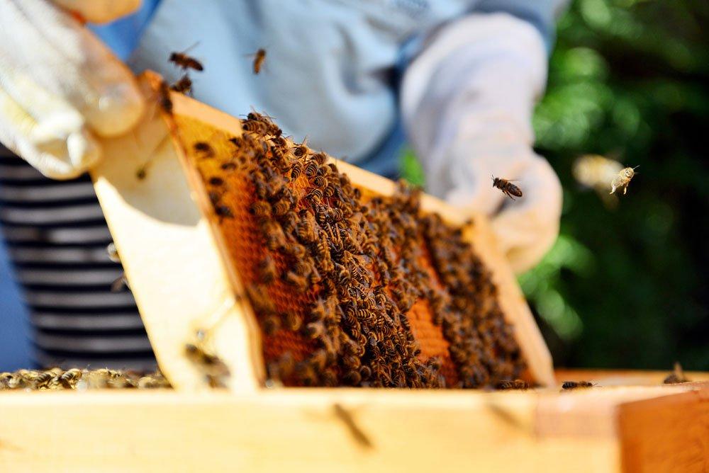 Bienen halten auf dem Balkon