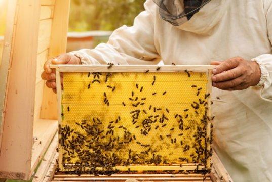 Bienen auf dem Balkon halten: So klappt's mit dem Imkern in der Stadt