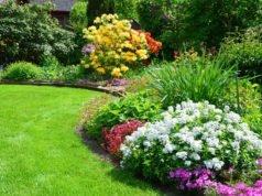 Rasen organisch düngen