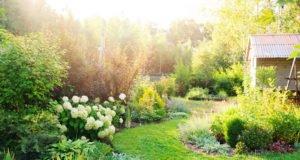 Schmaler Garten