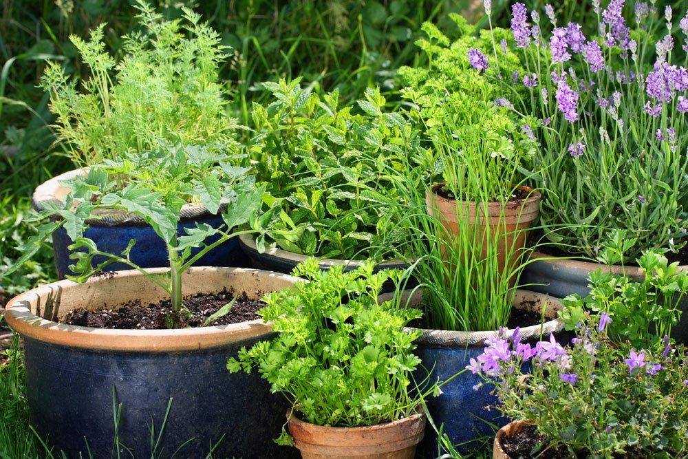 Garten skandinavisch einrichten - Kräutergarten