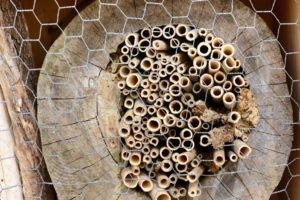 Insektenhotel aus Baumstamm bauen