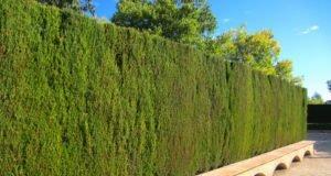 Zypresse - Krankheiten und Schädlinge erkennen und bekämpfen