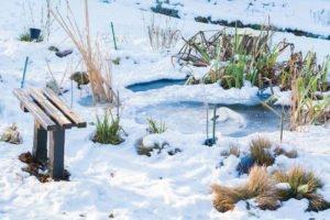 Gartenteich Eisfrei Halten 5 Effektive Methoden Vorgestellt
