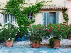 Oleander gießenund düngen - So machen Sie es richtig