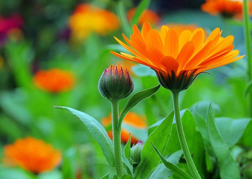 Wettervorhersage im Garten - diese Pflanzen sagen das Wetter voraus
