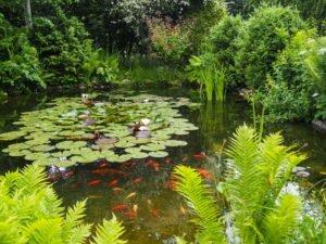 8 Tipps Für Klares Wasser Im Gartenteich