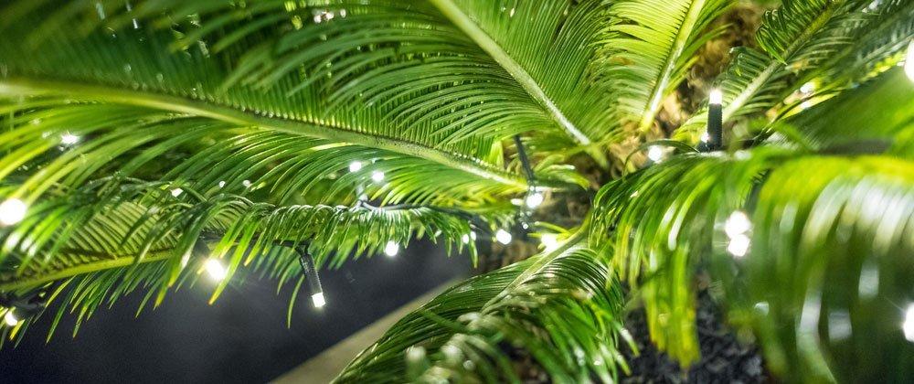 Beleuchtung auf dem Dschungel-Balkon