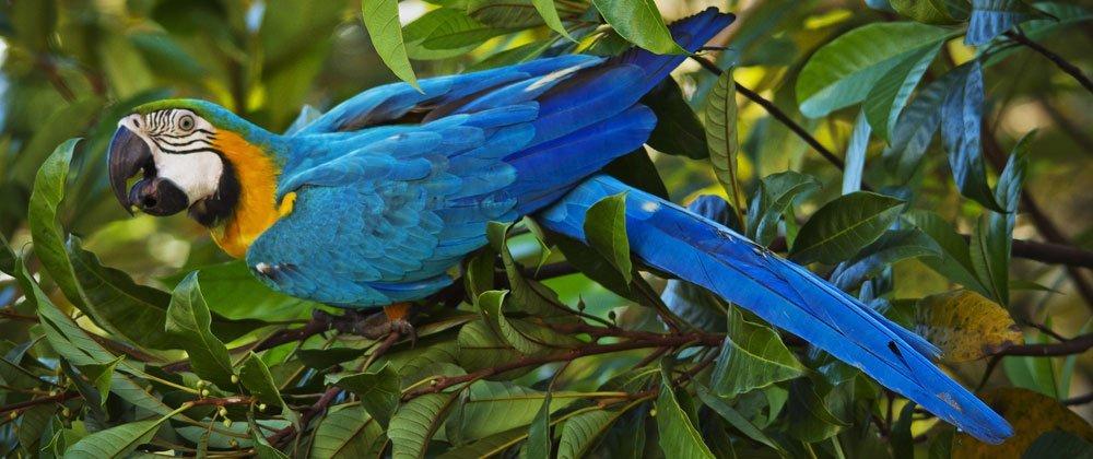 Deko auf dem Dschungel-Balkon