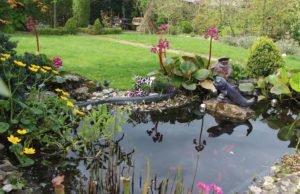 Sonnenschutz für den Gartenteich - 6 Möglichkeiten vorgestellt