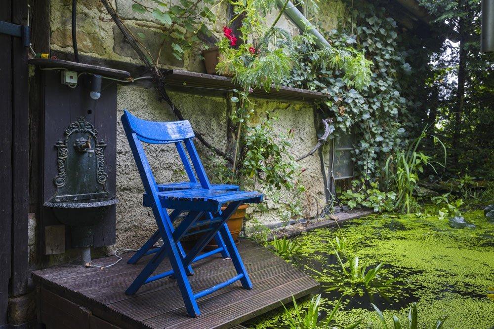 Wasserlinsen als Sonnenschutz für den Gartenteich