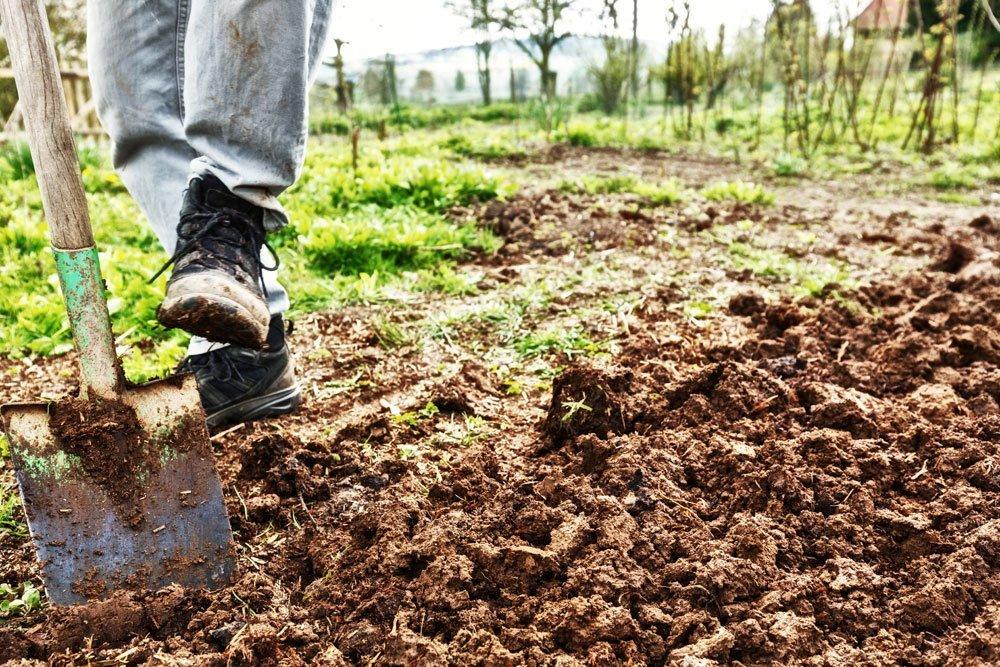 Garten umgraben - Nötig oder nicht?