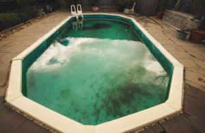 Algen im Pool