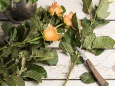 Schnittblumen richtig schneiden - Tipps zu Schnitt, Technik & Werkzeug