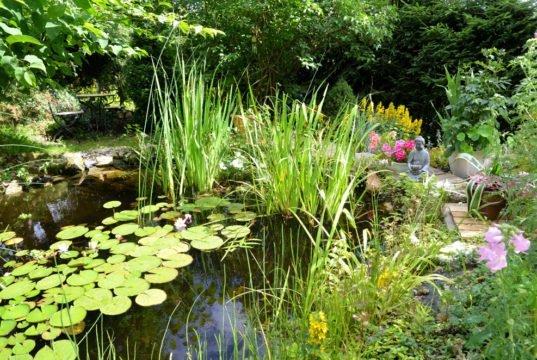 Teichpflege im Sommer - Das gibt es jetzt zu tun