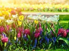 Giftige Sommerblumen
