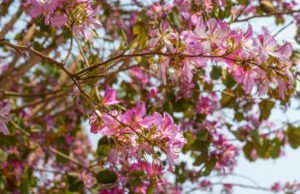 Orchideenbaum - Krankheiten & Schädlinge erkennen und bekämpfen