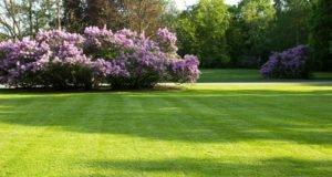 Lücken im Rasen - Ursachen und Reparatur