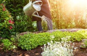 Mietergarten: Wer zahlt Gartenpflege - Mieter oder Vermieter