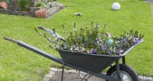 Upcycling: Von der alten Schubkarre zum Beet