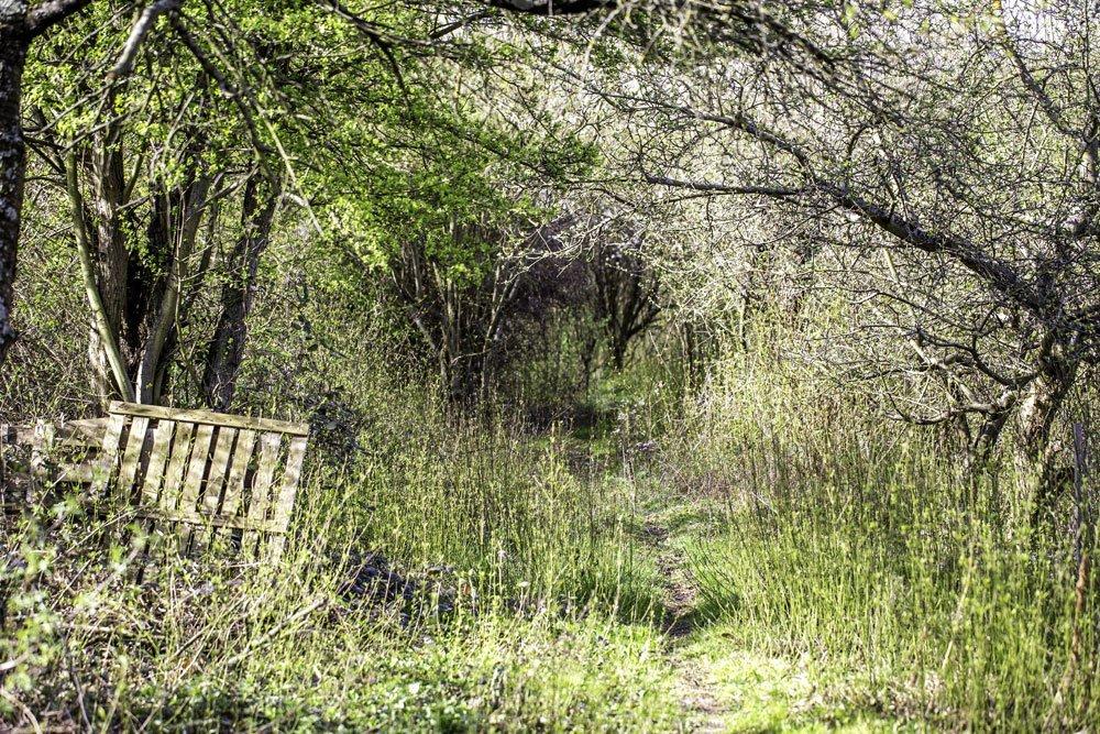 Verwahrloster Garten