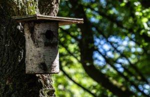 Vogelhaus aus Baumstamm bauen
