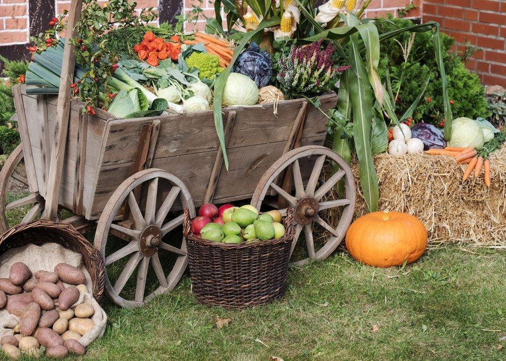 Mit dem Garten Geld verdienen - Ware präsentieren