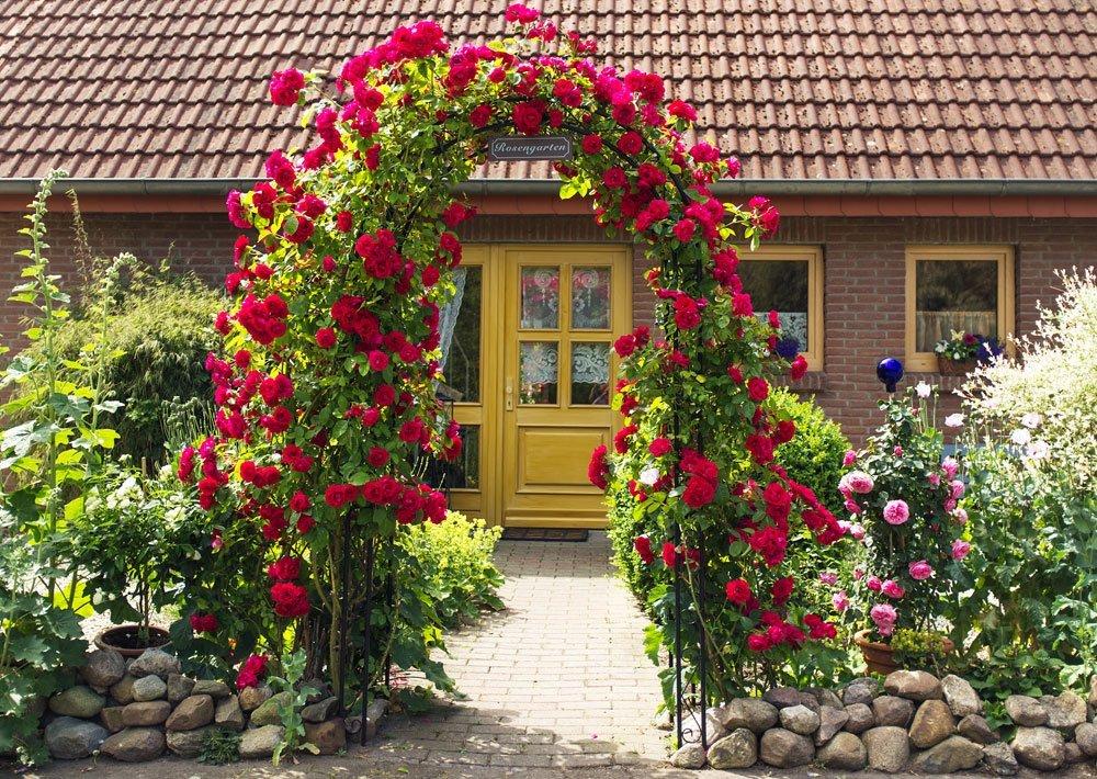 Rosenbogen - Bepflanzung und Pflege Kletterrose