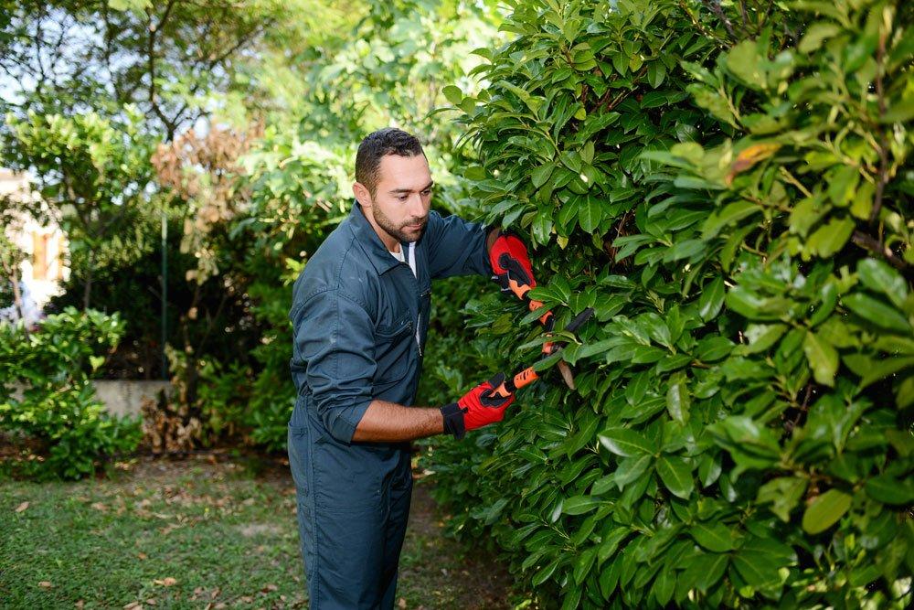 Umwelt-Bußgeldkatalog - Vergehen Garten Hecke schneiden