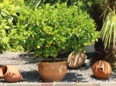 Mediterranen Garten anlegen