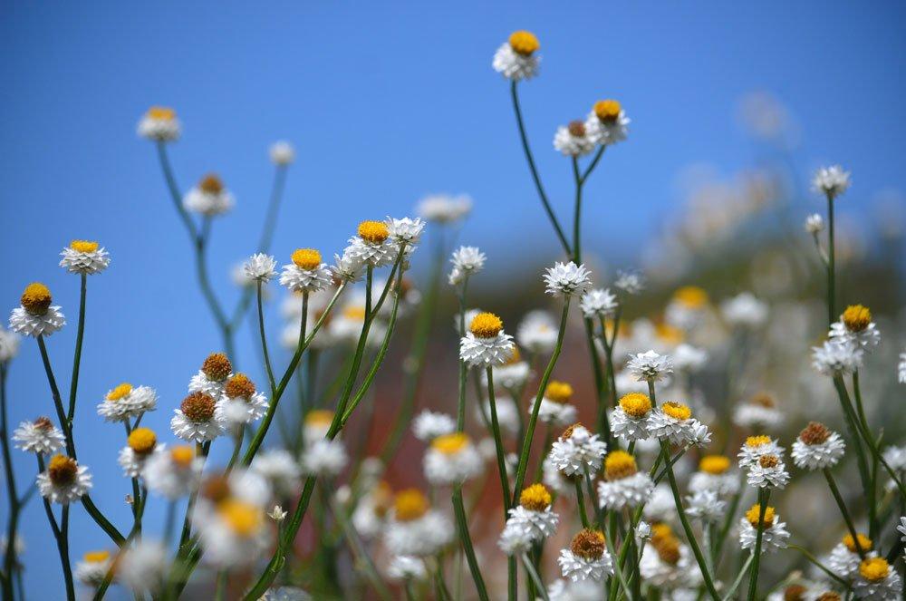 Papierknöpfchen als Trockenblume verwenden