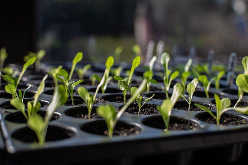 Stecklinge bei Hitze vermehren