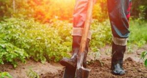 Baum umpflanzen - Anleitung & Tipps
