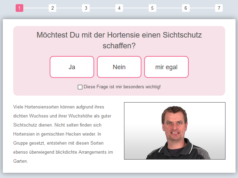 Hortensien Finder der Baumschule Horstmann