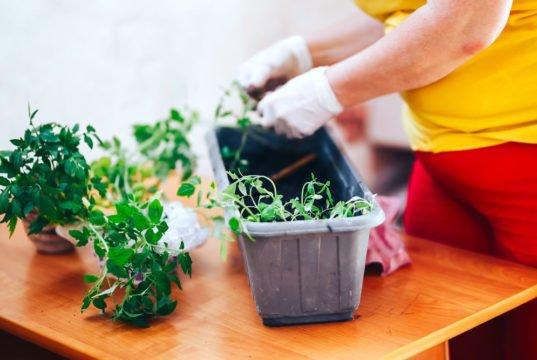 Livingroom Gardening