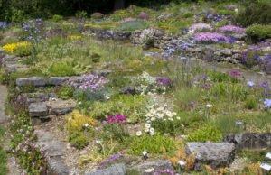 Steingarten anlegen Stauden