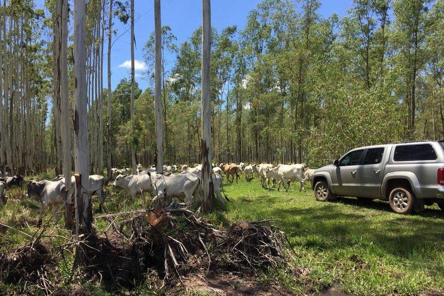 aufgeforstete Waldfläche Paraguay