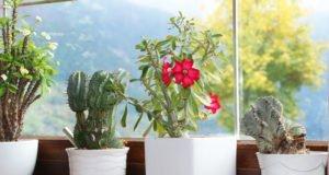 giftige Zimmerpflanzen