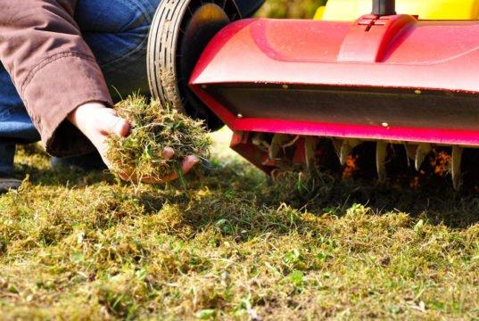 Moos aus Rasen entfernen