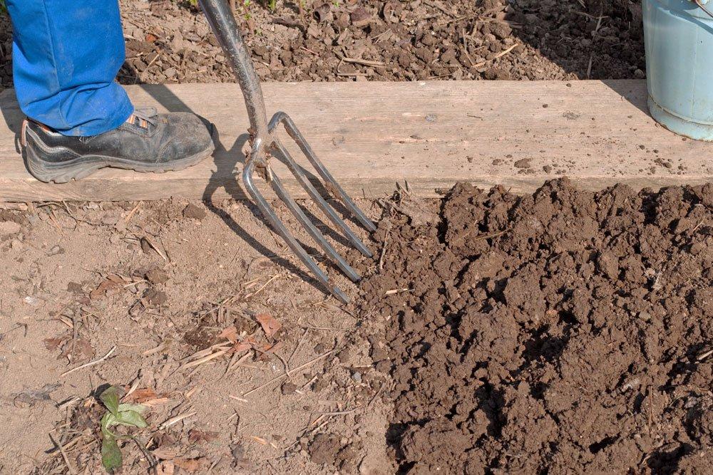 Kartoffeln pflanzen - Boden vorbereiten