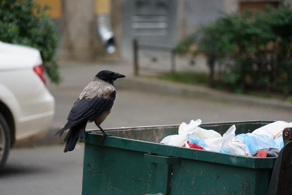 Maden Mülltonne Vogel