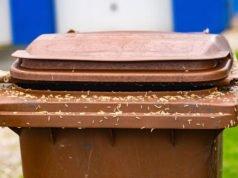 Maden in der Mülltonne vorbeugen und bekämpfen