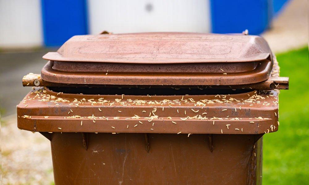 Maden in der Mülltonne vorbeugen und bekämpfen – So klappt's